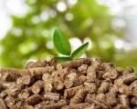 Nhiên liệu sinh khối, biomass là gì?
